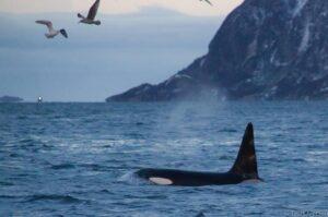 walvissen-spotten-vanuit-troms-in-tromso-169903